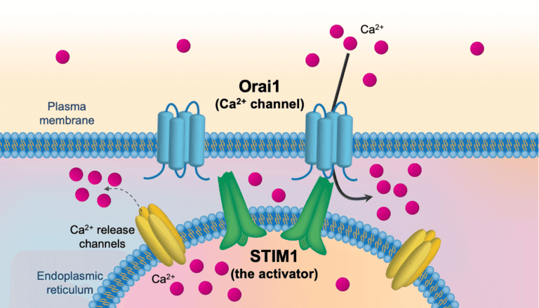 CalciMedica CRAC Channel Graphic